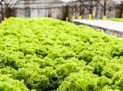 ¿Qué hidroponia? propio cultivo hidropónico