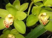 Cultivar orquídeas casa