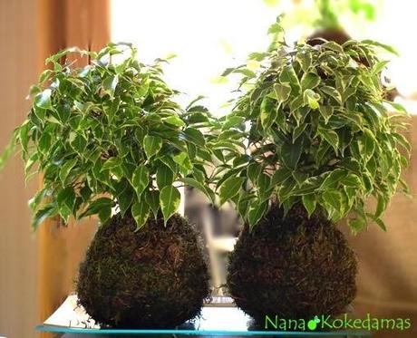 Plantas sin maceta, toallas tunecinas, búhos dormilones y mucho más.