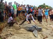 Inicia temporada desove tortugas Nueva Esparta