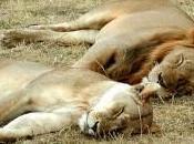 ¿Sabías algunos animales también sueñan?