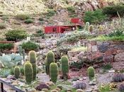 Chirau Mita jardín botánico 1.200 especies cactus todo mundo.