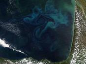 océanos 'recuerdan' posición capas agua mayor abundancia fitoplancton