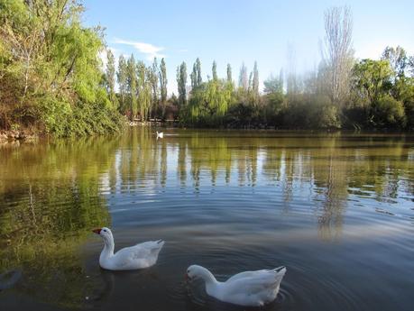 Parque natural el soto m stoles paperblog for Pisos en mostoles el soto