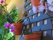 Orquídeas Diego.