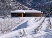 Cata vinos pequeños productores catalanes