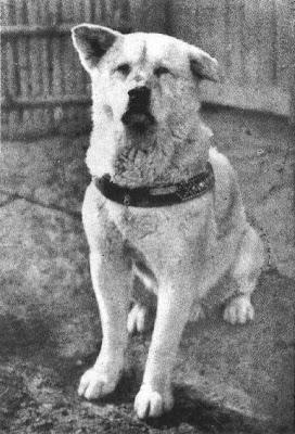 La lealtad del perro se llama Hachiko.