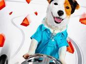 Divertido trailer final pancho, perro millonario