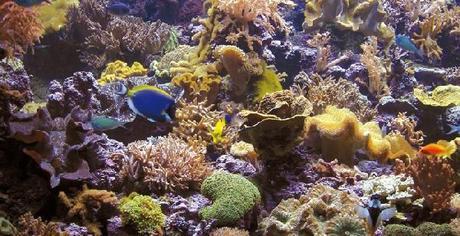 Getxo – El Aquarium de Getxo