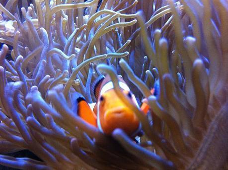 aquarium-de-getxo