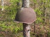 Equipos militares rusos Segunda Guerra Mundial engullidos árboles.