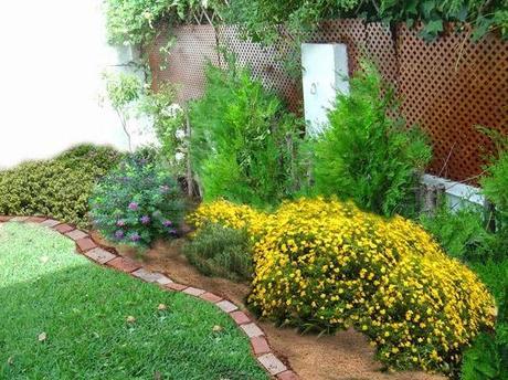 El cuidado de arbustos paperblog for Arbustos decorativos