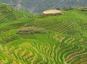 Excursión bancales arroz Espinazo Dragón (Longsheng)