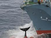 caza ballenas firma nipona: Antártico, Pacífico,