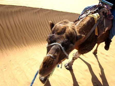 Un día que recuerdo siempre con mucho cariño fue cuando me levanté por la mañana en el desierto del Sáhara y lo primero que hice, antes de desayunar o quitarme las legañas, fue montar en camello.