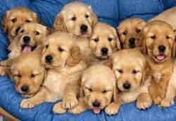 perros_peques
