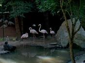 Outeiro- Parque Zoológico Ornitológico Lugo.
