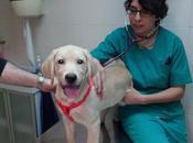 Entrevista Mónica Sáez, especialista veterinaria educación canina