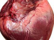 Regeneración Cardíaca Células Madres