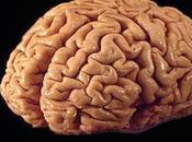 Técnicas neuroimagen. estudio cerebro humano vivo.