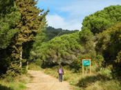 Ruta Serralada Litoral. Cabrils Granollers Roca Orenetes