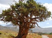 sabina albar Marruecos. Valle Bouguemez