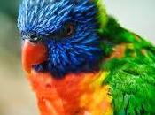 Paltas, reserva natural aves migratorias