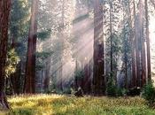 Fotografían árbol grande mundo