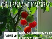 ¿Qué pasa tomatera? Problemas flores frutos