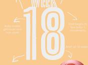 Semana Embarazo Week Pregnancy
