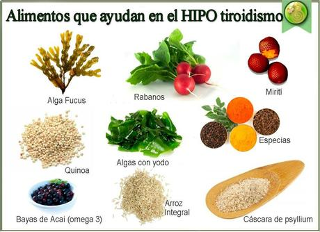 Dieta para Personas con Hipotiroidismo - Paperblog