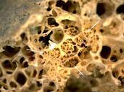 Paleooncología