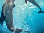 "Primer póster ""dolphin tale"