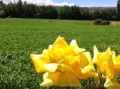 Macro día.... Flores