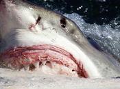 Comer carne tiburón podría matarte