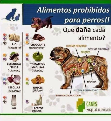 Alimentos Prohibidos Para Perros Infograf A Alimentaci N