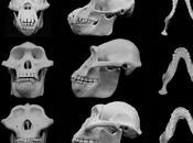 rostro nuestros antepasados, modificó violencia