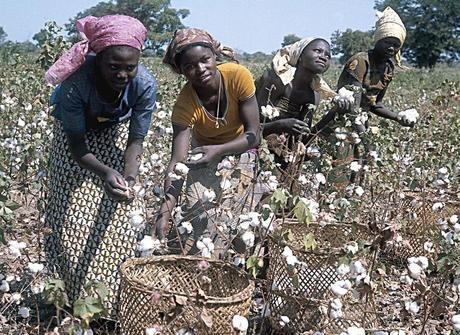 cultivo-de-algodon-en-africa