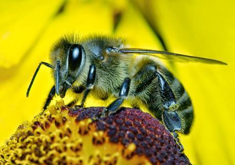 Los insectos son seres sintientes