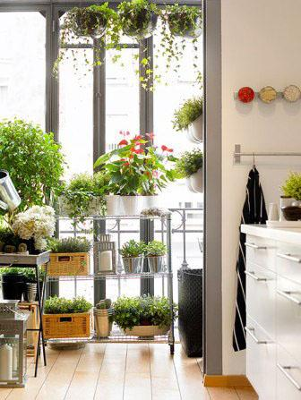Hierbas y plantas arom ticas en tu cocina paperblog - Plantas aromaticas en la cocina ...