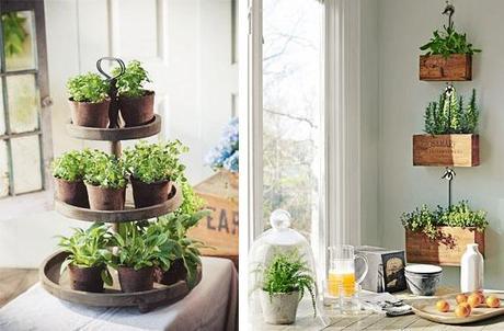 hierbas y plantas arom ticas en tu cocina paperblog