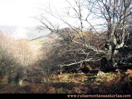 Ruta Cuyargayos: Por el bosque al paso del Escobio