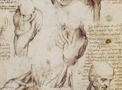 anatomía según leonardo vinci