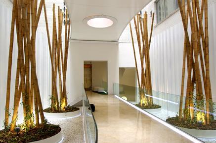 Especial decoraci n y paisajismo en oficinas y edificios - Cana bambu decoracion ...