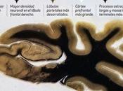 ¿Qué hacía diferente cerebro Einstein?