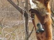 Otros visitantes comederos aves