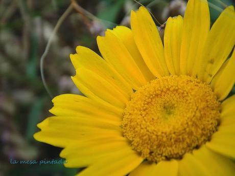 Macro del día... flores silvestres