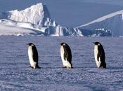Pingüinos Cambio Climático