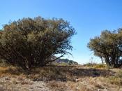 Mola Montsant. Ulldemolins (Tarragona)