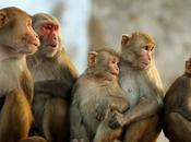 monos también creen rachas ganadoras